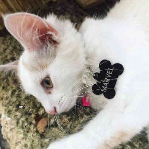 Marvel - Black Bone Pet Tag